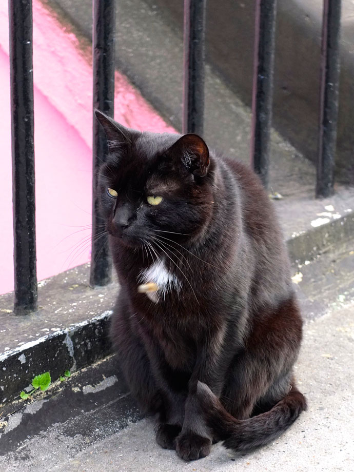black cat notting hill
