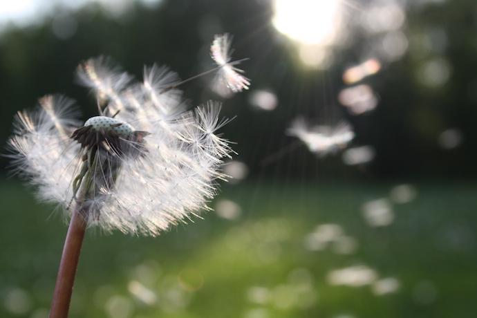 Grass pollen is an allergy trigger