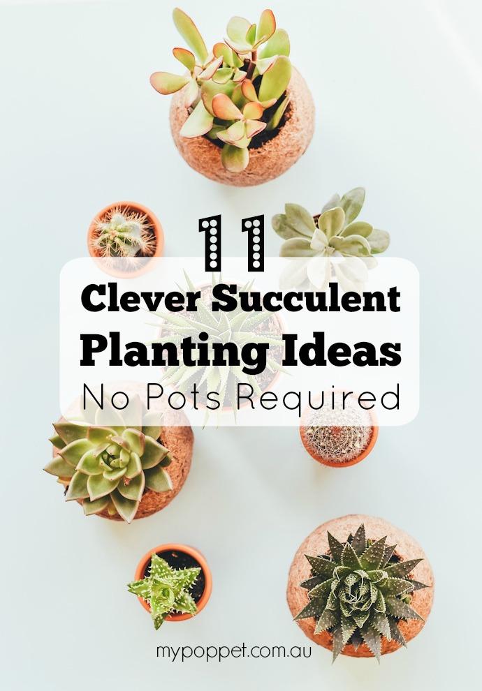 11 succulent planting ideas - No pots required mypoppet.com.au