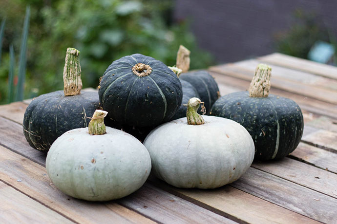 home grown pumpkins