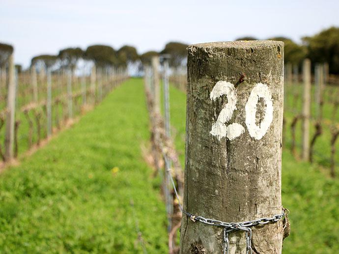 basalt wines Port Fairy Weekend Travel Guide - Great Ocean Road Victoria mypoppet.com.au