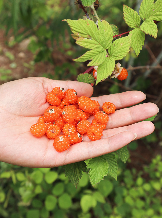 Wild Raspberries Lijiang China - mypoppet.com.au