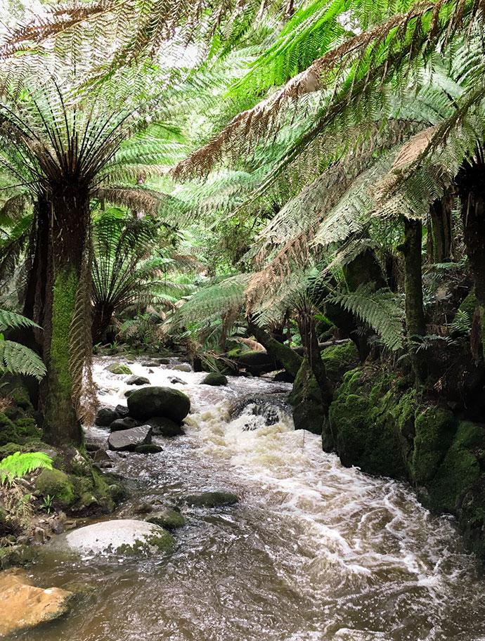 Tasmania East Coast Road Trip - mypoppet.com.au