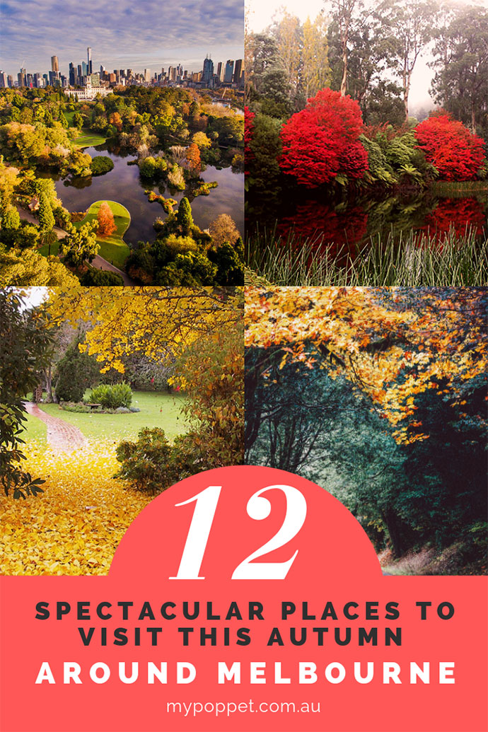 Where to see the best Autumn Colours in Melbourne Victoria Australia - mypoppet.com.au