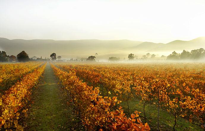 yarra valley Victoria