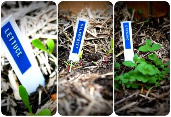 retro garden markers