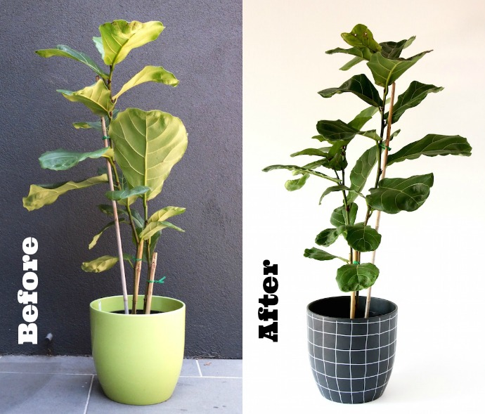 Makeover a boring plant pot