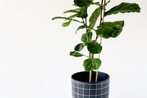 Mid Century Plant Pot Makover
