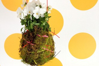 How to make a Kokedama Hanging Plant