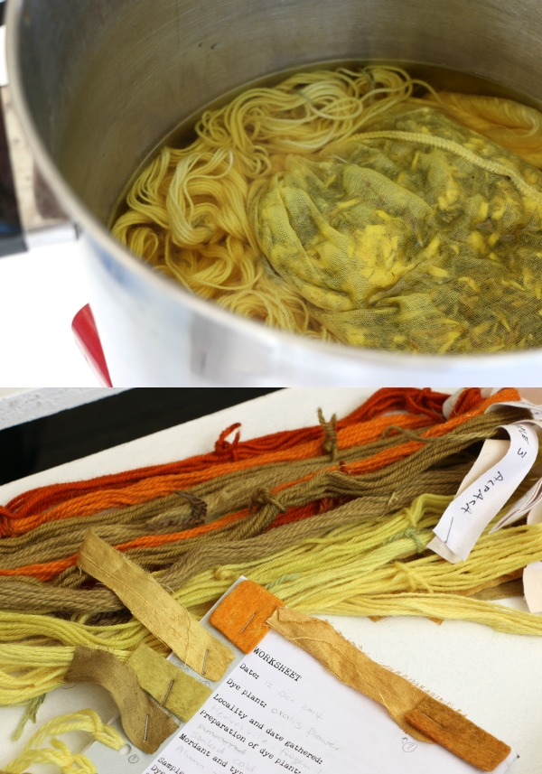 oxalis dyeing