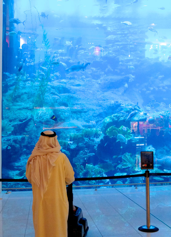 Dubai mall aquarium and zoo